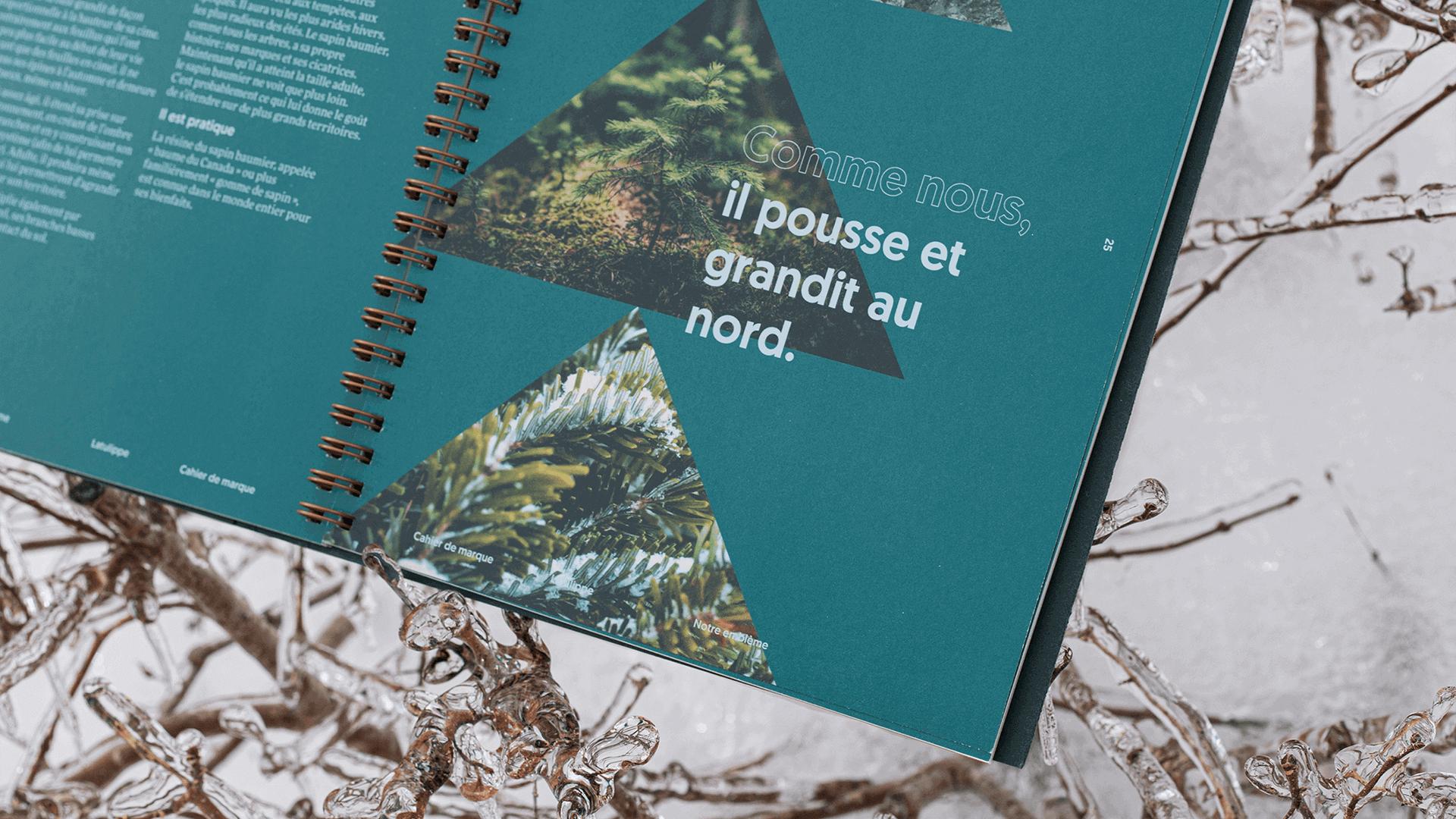 Branding   Couverture du cahier de marque (brand book)   Latulippe